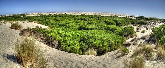 Parque Nacional de Doñana, panorámica sobre las dunas.jpg