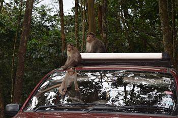 Periyar Tiger Reserve3.jpg