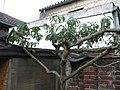 Pfirsichbaum nach dem Herbstschnitt, 31.10. 2012 - panoramio.jpg