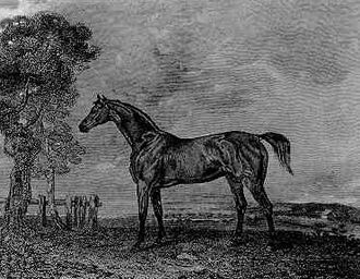 Phantom (horse) - Phantom. Contemporary engraving. Possibly based on painting by James Ward