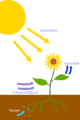 Photosynthesis - de.png