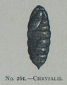 Picture Natural History - No 261 - Chrysalis.png
