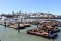 Pier 39 - panoramio (22).jpg