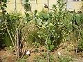 PikiWiki Israel 13839 Rina Smilansky Garden in Rehovot.JPG