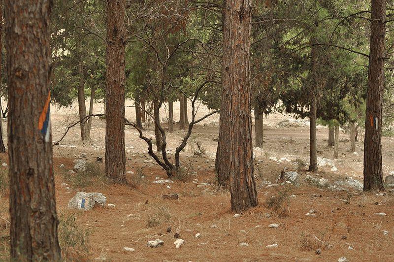 שביל ישראל ביער ציפורי