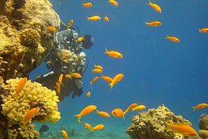 Eilat's Coral Beach - Image: Piki Wiki Israel 15808 Diving in Yam Sof