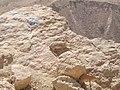 PikiWiki Israel 18015 Deer.jpg