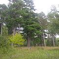 Pines Park 1.jpg