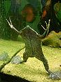 Pipa pipa juillet 2007 - 3.jpg