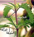 Plant nodes c-ar.jpg