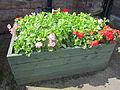 Planter at Ellesmere Port railway station (4).JPG