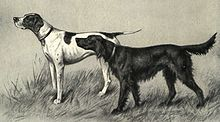Pointer and Irish Setter Portrait.jpg