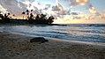 Poipu Beach, Koloa (503224) (17190924222).jpg