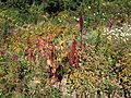 Poltava Botanical garden (80).jpg