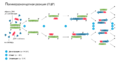 Polymerase chain reaction.rus.png