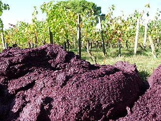 Pomace brandy - Red grape pomace in a vineyard