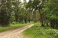 Pretschen Waldweg.JPG