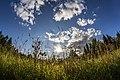 Prigorodnyy r-n, Sverdlovskaya oblast', Russia - panoramio (184).jpg