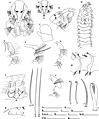 Prionospio cf. ehlersi (10.3897-zookeys.810.26910) Figure 2.jpg