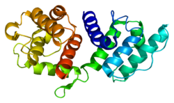 Protein ACTN3 PDB 1tjt.png