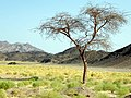 Qesm Marsa Alam, Red Sea Governorate, Egypt - panoramio (7).jpg