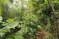 Quitos botaniska trädgård-IMG 9228.JPG