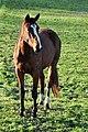 Rüti - Weid 2010-11-14 15-32-58.jpg