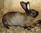 Rabbit DSC00382.JPG