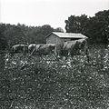 Ray farm 1940s Ashland Alabama 05.jpg