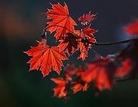 Red (3459513331).jpg