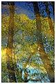 Reflections (18870972331).jpg