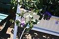 Rhododendronpark Bremen 20090513 176.JPG