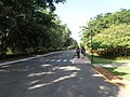 Road in front of the reception, facing west, Infosys Mysore.JPG