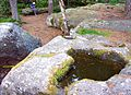 Rochers des géants. Cupules sommitales. (2). 18-06-09.jpg