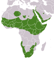 Rock Hyrax area.png