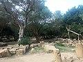 Ruines Romaines Tipaza 48.jpg