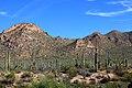 Saguaro 05.jpg