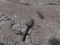 Sakhalin mud Volcano 6.jpg