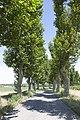 Salles-d'Aude - panoramio (14).jpg