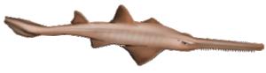 Sawfish (window manager) - Sawfish logo