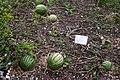 Schloss beuggen 02.09.2012 13-56-04.jpg