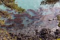 Sea weed by Coastal Cliffs Walkway, Canterbury, New Zealand 02.jpg