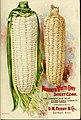 Seed annual, 1899 (16417403566).jpg
