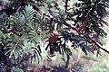 Senegal 1992 (4686362202).jpg
