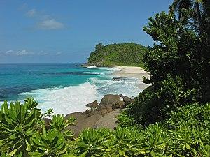 Scaevola taccada - Scaevola taccada habitat, Seychelles