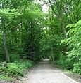 Shibden Park Woodland Walk - geograph.org.uk - 825592.jpg