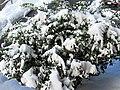 Silver Spring Snow 03.jpg