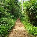 Sinharaja Rain Forest - panoramio (1).jpg