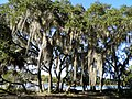 Skidaway Island SP Avian Loop Trail - panoramio.jpg