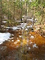 Skogsstig vid snösmältning Kurjenrahka 2010.jpg